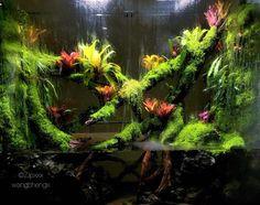 Tropical Terrariums, Orchid Terrarium, Terrarium Reptile, Aquarium Terrarium, Terrarium Plants, Frog Tank, Aquarium Landscape, Les Reptiles, Pisces