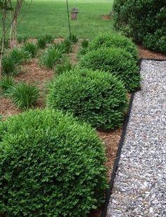 Boxwood Green Velvet