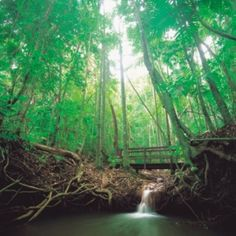 Travel and see the Rain Forrest.
