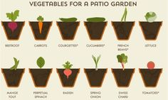 Plant these vegetable together to make the most use of space and deter pests