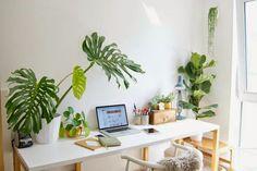 Decora con flores y plantas cualquier estancia de casa