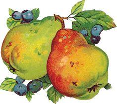 Картинки для декупажа.Винтажные фрукты и ягоды . Обсуждение на LiveInternet - Российский Сервис Онлайн-Дневников