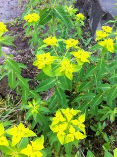 5/9 キレイな花が咲いてる~。 ~beautiful flower!