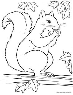 Fall Coloring Pages, Coloring Pages For Boys, Animal Coloring Pages, Coloring Books, Fall Canvas Painting, Animal Templates, Pencil Sketch Drawing, Easy Drawings, Animal Drawings