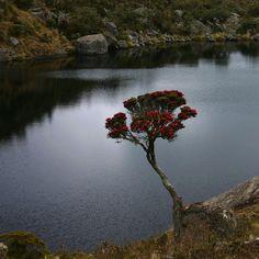 Una de las lagunas siamesas de Páez, Páramo de Santurbán, Santander. Fotografía de @Jorwisan