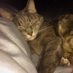 Kitty makes it hard to get out of bed. #kittycuddles #cutenessoverload #mondaymorning  #catsofinstagram #catstagram #catsagram #catslover #catslovers #cats #sleepingcat #sleep #sleeping #cute #cutecat #cuteness #cuddling #cuddles #cuddle #cuddlebuddy #monday
