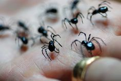 Fly tying with realistic spider patterns.