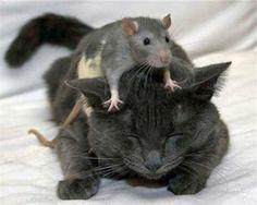 MouseandKitty.jpg (650×520)