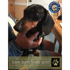 Great news for Bam-Bam! He has found the home of a lifetime.