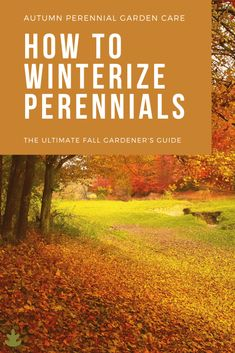 Fall is coming! It's time to start putting the garden to bed before the frosty winter season begins. Here's what I've learned over the years about how to winterize perennials. Cold Climate Gardening, Hosta Plants, Potted Plants, Fall Clean Up, Winter Temperature, Hardy Perennials, Organic Gardening Tips, Fall Is Here, Deciduous Trees
