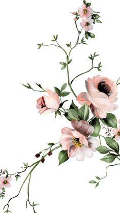 Flowers Illustration, Botanical Illustration, Botanical Flowers, Botanical Art, Watercolor Flowers, Watercolor Art, Flower Art Images, Foto Transfer, Design Floral