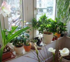 Natürlich schön - Zimmerpflanzen - Scoolz hat sich für dich durch den Dschungel der Pflanzenpflege gekämpft: Pflanzen für jeden Winkel.