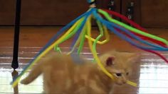 Kittens in Action Having Fun with a new toy http://ift.tt/24yENxi