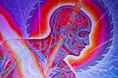 Human mind - The five hindrances and how we can overcome them... #1 Especially!