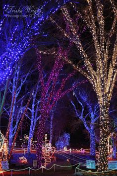 Be sure to check out the ZOO LIGHTS at CALM zoo in Bakersfield!