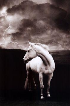 White horse,