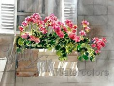Pink Geranium Flowers & Ivy in White Window Box / White Shutters, Watercolor…