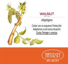 Walnut: Adaptógena - Flores de Bach de NATURSET