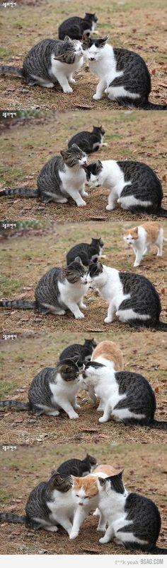 Jealous Cat is jealous