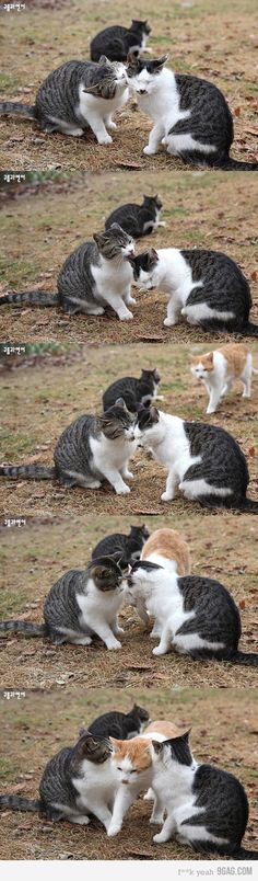 Jealous Cat is jealous