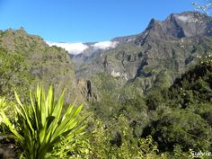 Sur le chemin de la cascade du Bras Rouge / Ile de la Réunion