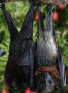 """Bumblebee Bat, the worlds lightest mammal. Visit Facebook: """"Animals are Awesome"""". Animals, Wildlife, Pictures, Photography, Beautiful, Cute."""