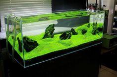 Beautiful green carpet