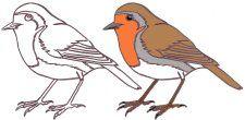 La plus belle collection de coloriages d'oiseaux du Net Le glossaire : Pour apprendre les termes scientifiques en s'amusant.