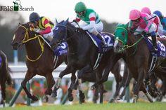 マリアライト Marialite (JPN) 2011 Dkb.m. (Deep Impact (JPN)-Chrysoprase (JPN) by El Condor Pasa (USA) 1st Queen Elizabeth II Commemorative Cup (JPN-G1,2200mT,Kyoto) (photo: JBIS)