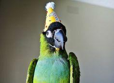 30 animaux de compagnie complètement excités à l'idée de fêter leur anniversaire | Buzzly