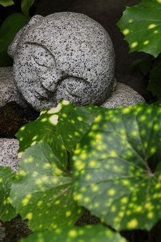 Kenninji temple #japan #kyoto