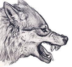 wolf drawing - Google zoeken