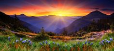 new-zeland-10000×4558-mountain-sunset-flowers-field-4691 – Audacity and Supposition
