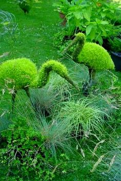 Creative Art work in Plants