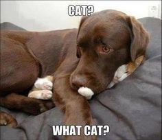 Dump A Day Funny Animal Pictures Of The Day - 38 Pics