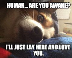 """I'll love you by staring at you until you ARE awake!"" #dogs #doglovers"