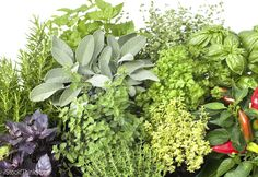 Carve out a niche at your local market by growing fresh herbs that are hard to find.