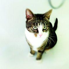 【#cat #katze #katzen #cats #kitty #kitten #cute #cutie #cuties #sweet #catstagram #instahub #amazing #awesome #pretty #webstagram #instagramhub #instamood #instagood #instagram】  tiefsee@Instagram
