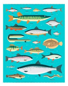 Campaign posters for Kärkimedia, one of the largest media companies in Finland. Sea Illustration, Pattern Illustration, Digital Illustration, Happy City, Fish Graphic, Campaign Posters, Fish Design, Thing 1, Fish Art