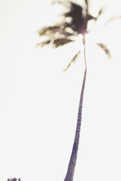 ahhhhhh...summer #summerlove #palmtree #summer www.chalknyc.com