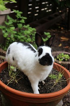 Bunny has been caught in the act - July 30, 2012