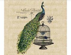 Peacock Birdcage Paris ephemera fleur de lis Digital download image for Iron on fabric transfer burlap paper pillows cards No. 598. $1.00, via Etsy.