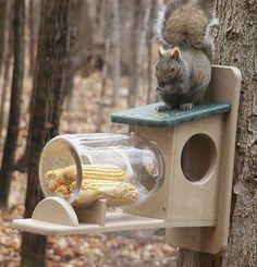 Two Tone Poly-Lumber Squirrel Jar Feeder - inthegardenandmore.com