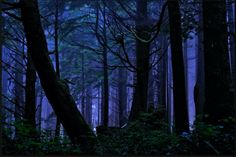 ~MOODY BLUE FOREST~