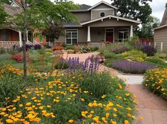 Starting From Scratch – Creating a Drought-Resistant Garden…