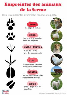 Farm animals footprint recognition   Reconnaître les empreintes - les animaux de la ferme