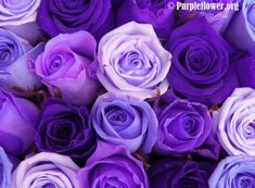 My favorite color roses!