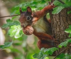 Wild Animals Videos, Funny Animals, Cute Animals, Squirrel Pictures, Lovely Creatures, Little Critter, Walk In The Woods, Chipmunks, Animals Beautiful