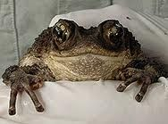 *squeal* IT'S A TOAD!!! To darn cute.
