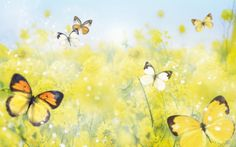 spring photography wallpaper free